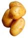 Russet Poatoes